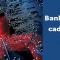 Banking Trojans cada vez mais comuns